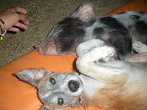Lucy (pig) & Mochi (dog)